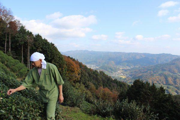 Matsu-san tea field