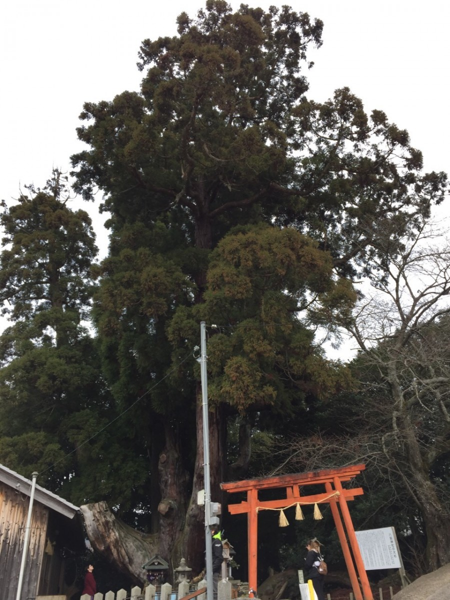 Yasaka shrine, with Susanoo and the ancient cypress