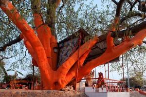 von-Schaewen-tree-2