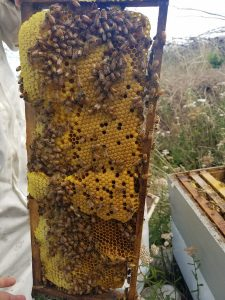 Honey around the left edges, brood  in the middle right section