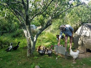 Automatic self-feeders for chickens and ducks