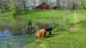 "Stopping for a drink on the way to the ""Back Seven"" at my family's farm."