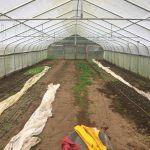 This high tunnel has been receiving many hours of work due to the heavy and persistent rain. We have almost gotten all the weeds removed, harvested the rest of the winter spinach, and are now transplanting radishes, beets, and carrots. Today we set up the drip tape for watering the newly added plants.