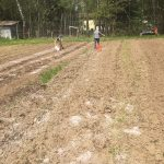 Applying soil amendments to one of the main fields.