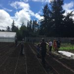 Big work day with the help of the youth and all the interns in shaping the raised beds out in the main fields.