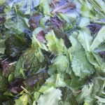 Salad mix of the week: mustard greens, butterhead and oakleaf, radish sprouts, spinach and dill.