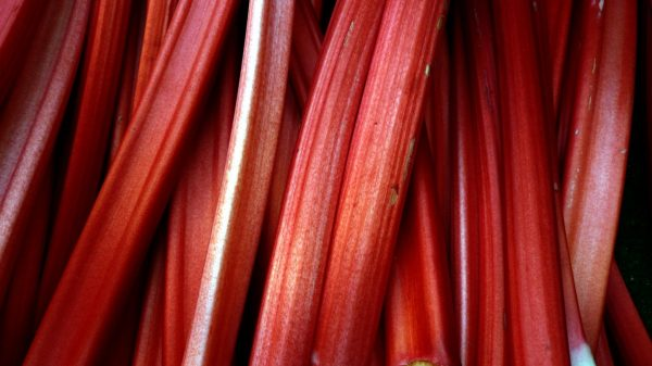 By Cory Doctorow from London, UK (Rhubarb, Borough Market, London, UK.JPG) [CC BY-SA 2.0 (http://creativecommons.org/licenses/by-sa/2.0)], via Wikimedia Commons