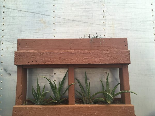 Pallet Garden with Aloe. Photo by Sophie Tuchel