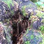 cliff of broken legs-13