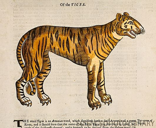 Of the Tiger - Edward Topsell