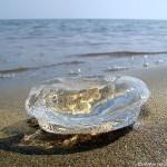 Nasiri, Mansour. Jellyfish. Digital image. Flickr.com. Web. 04 June 2012. .