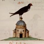 "from manuscript, ""De animalium proprietate"""