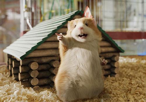 Syrian hamster golden hamster the ebestiary - Hamster agent secret ...