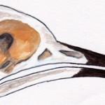 Skull - watercolour and gauche