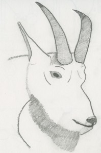 Large drawn Mountain Goat