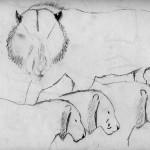 Tiger Sketches 2