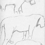 Tiger Sketches 3