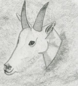 Drawn Mountain Goat head