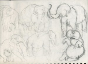 Rough Elephant Sketches