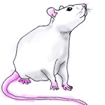 Fancy Rat