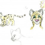 A rough sketch of the face, full body, and paw of a clouded leopard adult.