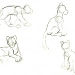 Sketches of different positions of an adult clouded leopard.
