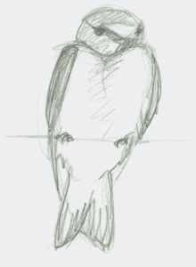 pencil sketch of cliff swallow perched on wire