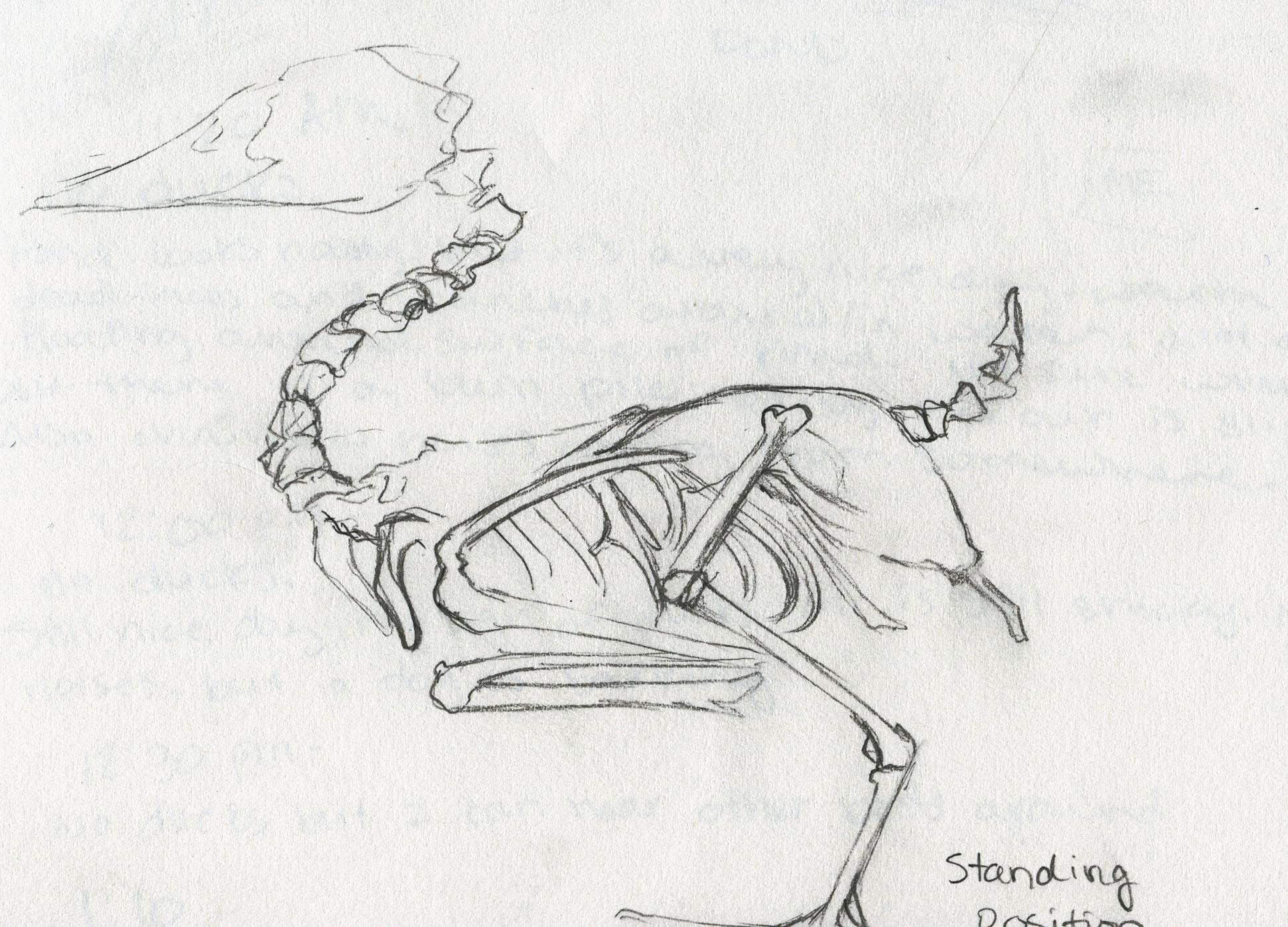 Mallard Duck | The eBestiary