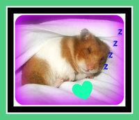 Weekly web roundup: Super-quick nonagenarians, super ...  Cute Baby Hamsters Sleeping
