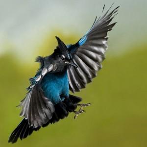 Roy Hancliff/ Birds in Flight