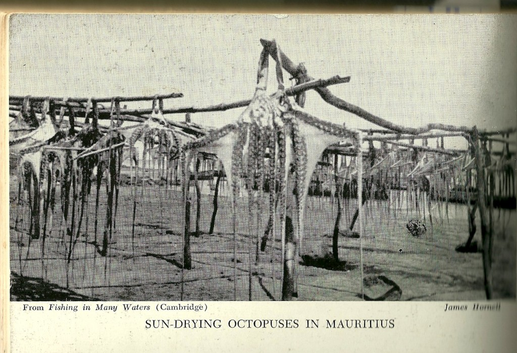 Image of hanging octopuses in the sun.