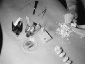 still from a 16mm film of natural science display preparation