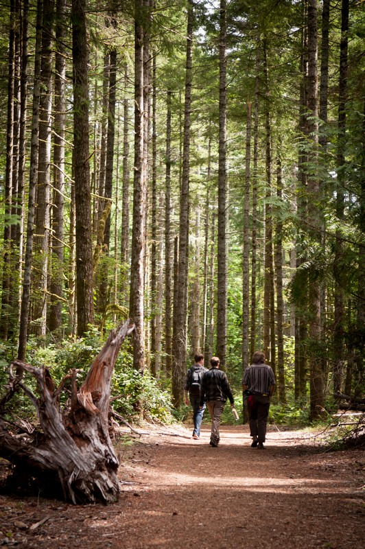Students walk through Evergreen forest trails on August 1st, 2012.