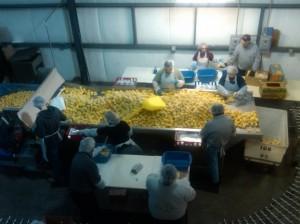 AmeriCorps members sorting food at Coastal Harvest