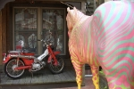 striped-horse