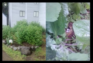 nest in garden blogpic