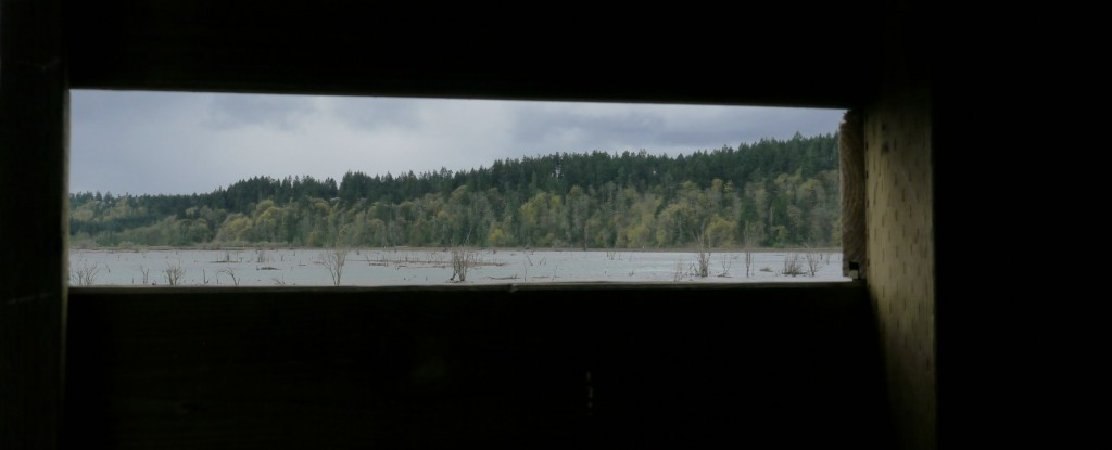 View of south hills from the Nisqually boardwalk bird blind.
