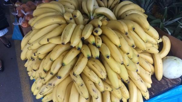 Banana Varieties And Tropical Fruit Trees Rio Grande Puerto Rico